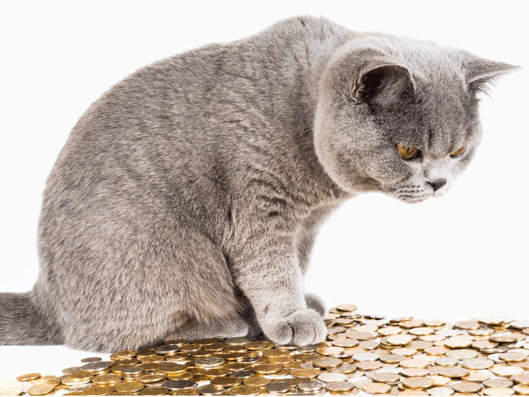Tierschutz FAQ Haustier Kosten