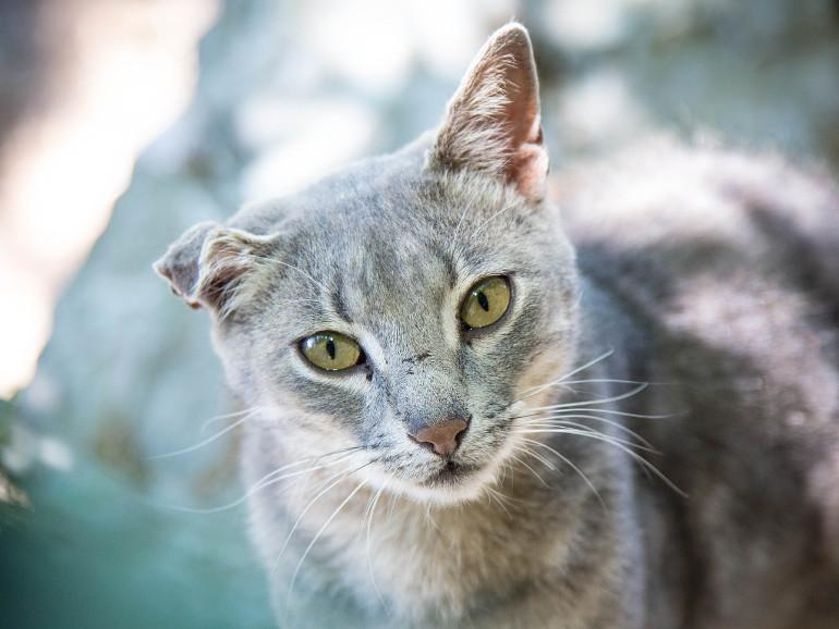 Tierschutz FAQ Katzenkastration