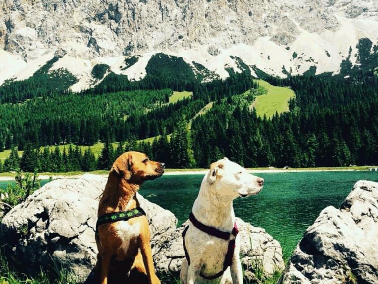 Tierschutz FAQ Reisen mit deinem Tier