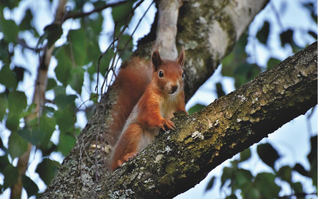 Tierschutz Beitrag Eichhörnchen