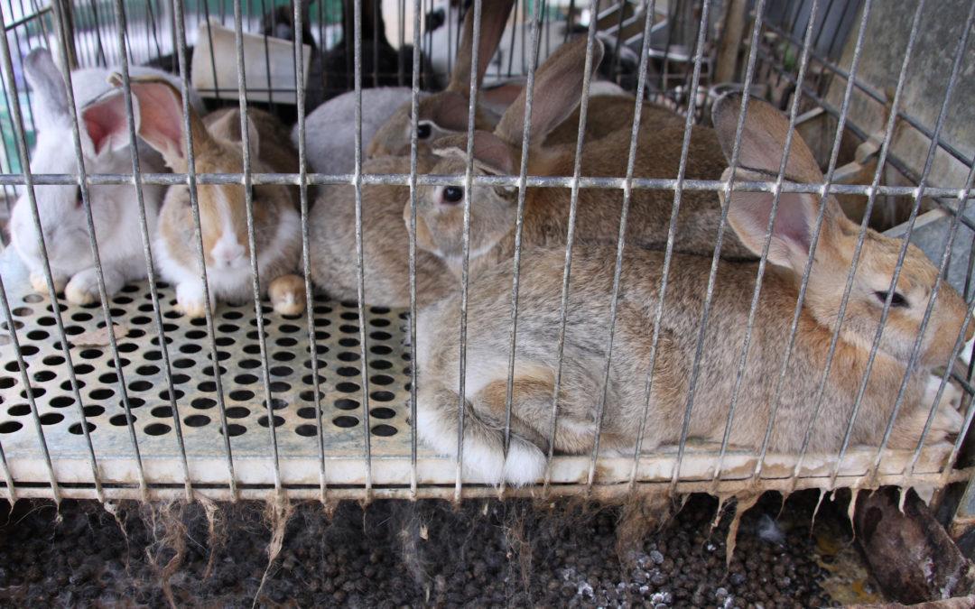 Kaninchenmast