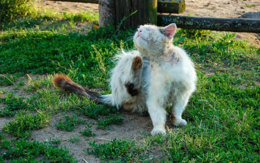 Tierschutz Beitrag Kennzeichnungs- & Kastrationspflicht für Katzen