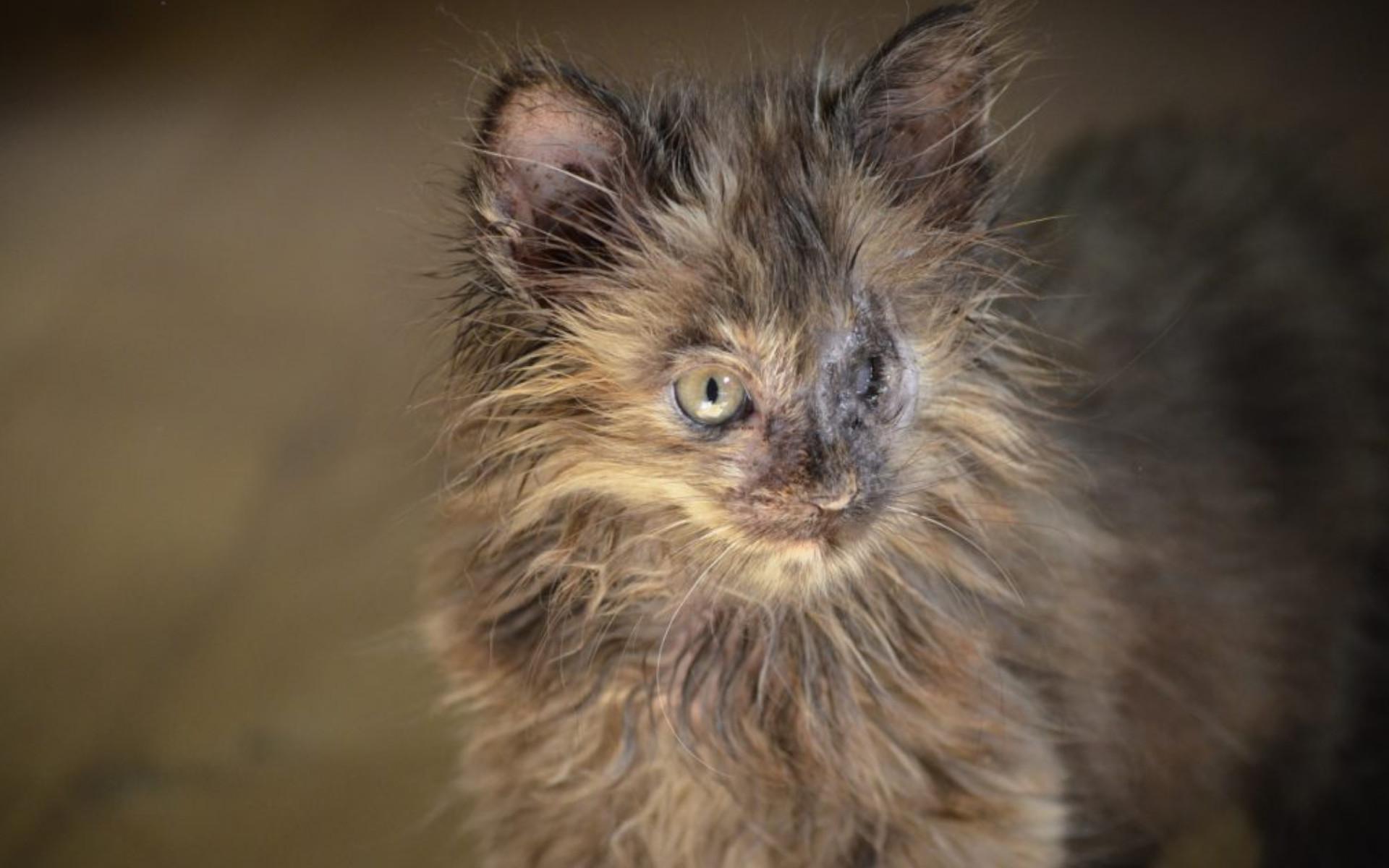 Tierschutz Beitrag Kennzeichnungs- & Kastrationspflicht für Katzen 2