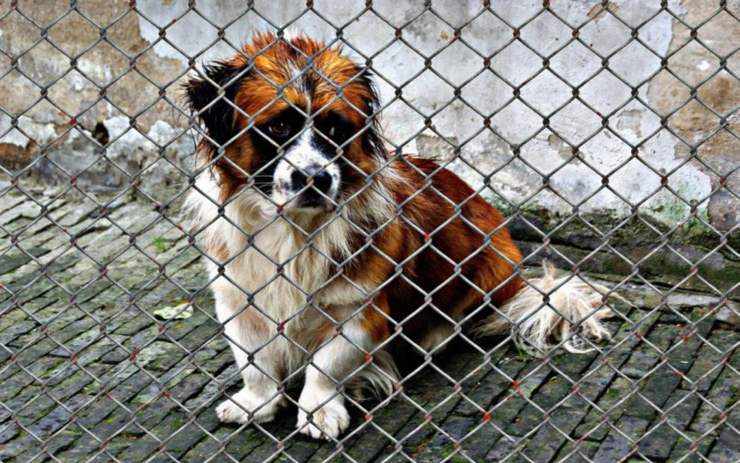 Tierschutz Beitrag Tierschutzorganisation oder Züchter