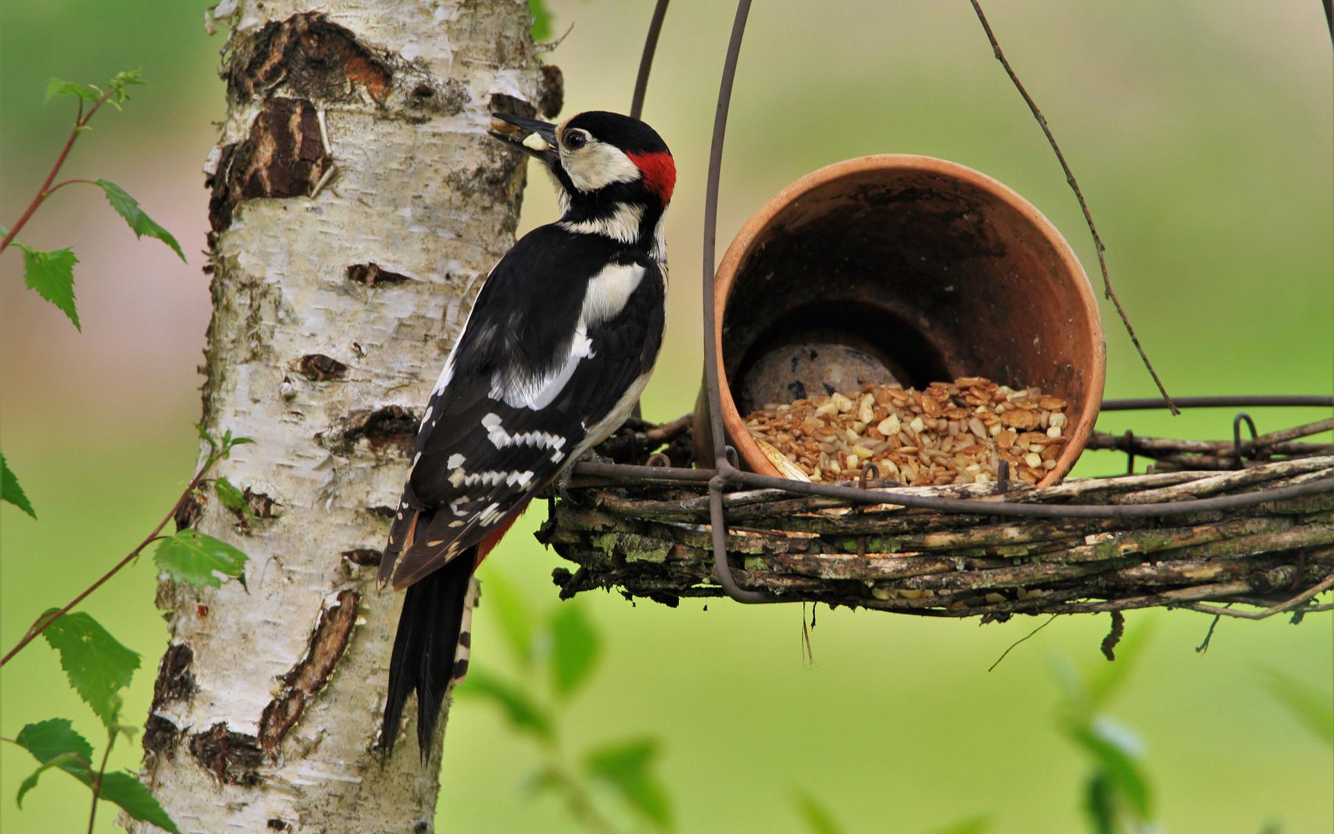 Tierschutz Beitrag Vogelhäuser und Wasserstellen - Vogel