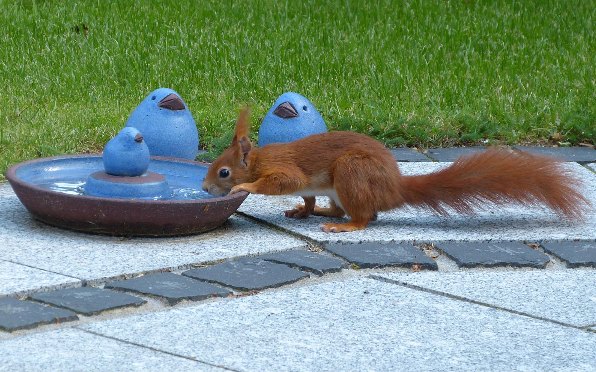 Tierschutz Beitrag Wasserstellen Eichhörnchen