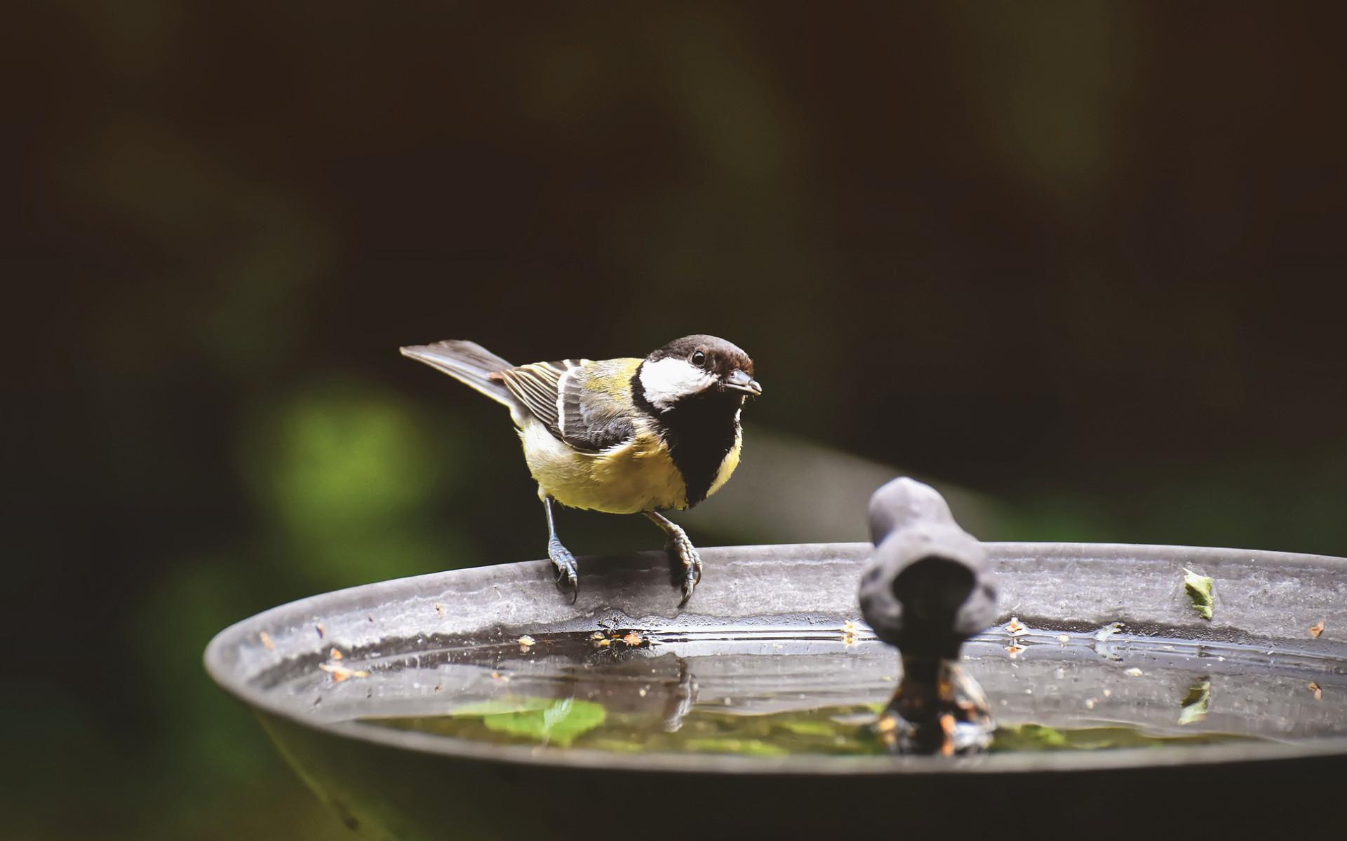 Tierschutz Beitrag Wasserstellen Vogel