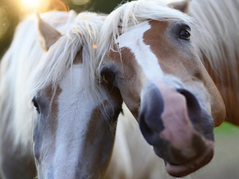 Tierschutz Kosten Pferd