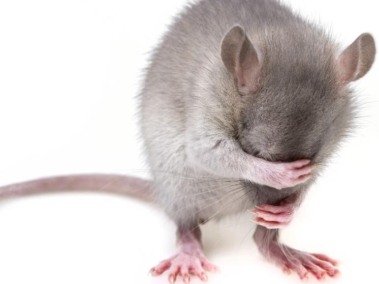 Tierschutz Tierversuche
