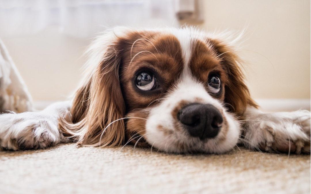 Der Hundeführerschein – Ja oder Nein?