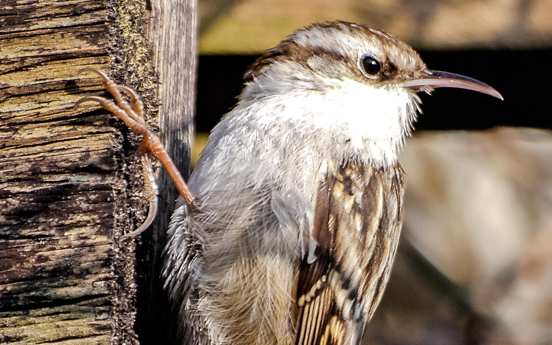Tierschutz Beitrag Baumläuferhöhlen