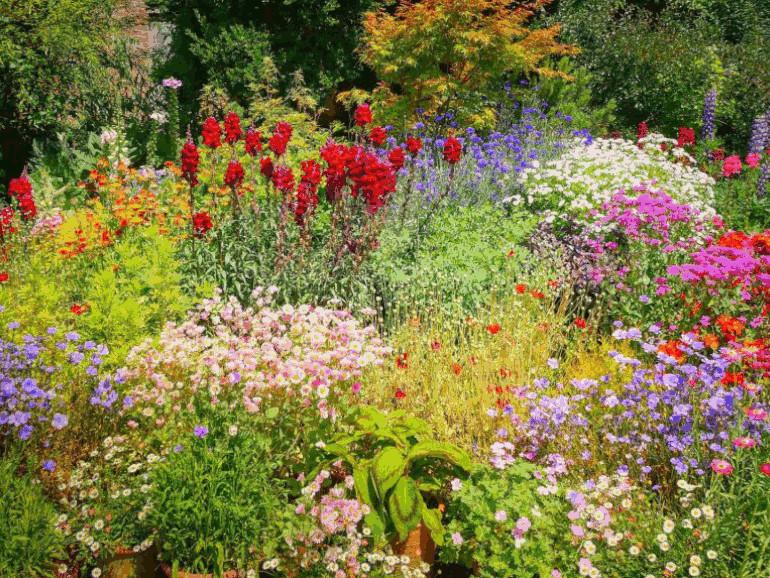Tierschutz Blumenwiese