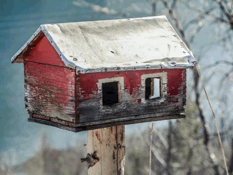Tierschutz Vogelhaus