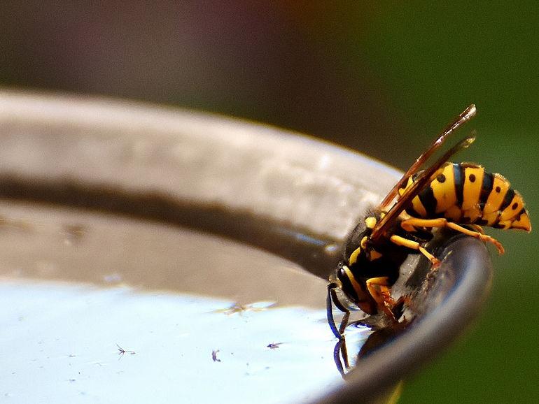 Tierschutz Wasserstellen