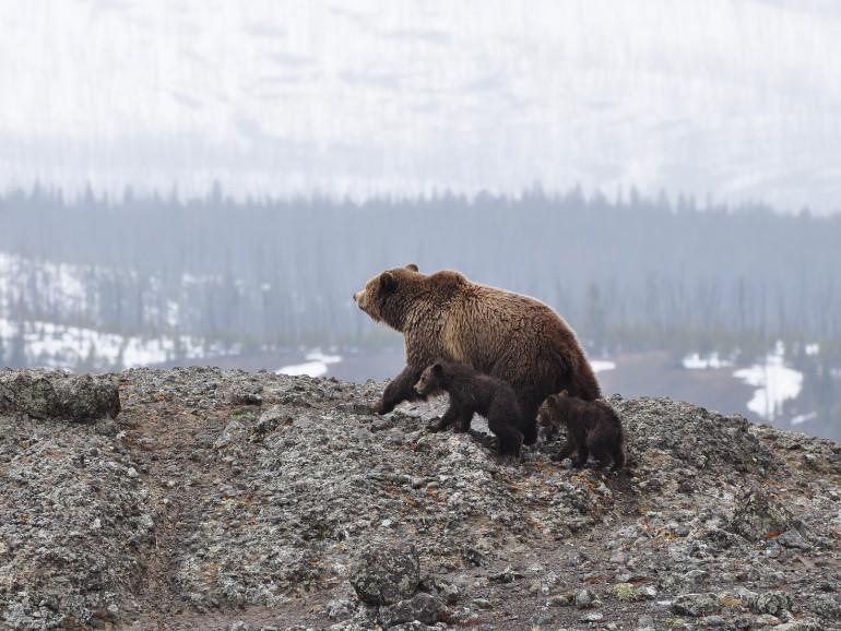 Private Bärenhaltung