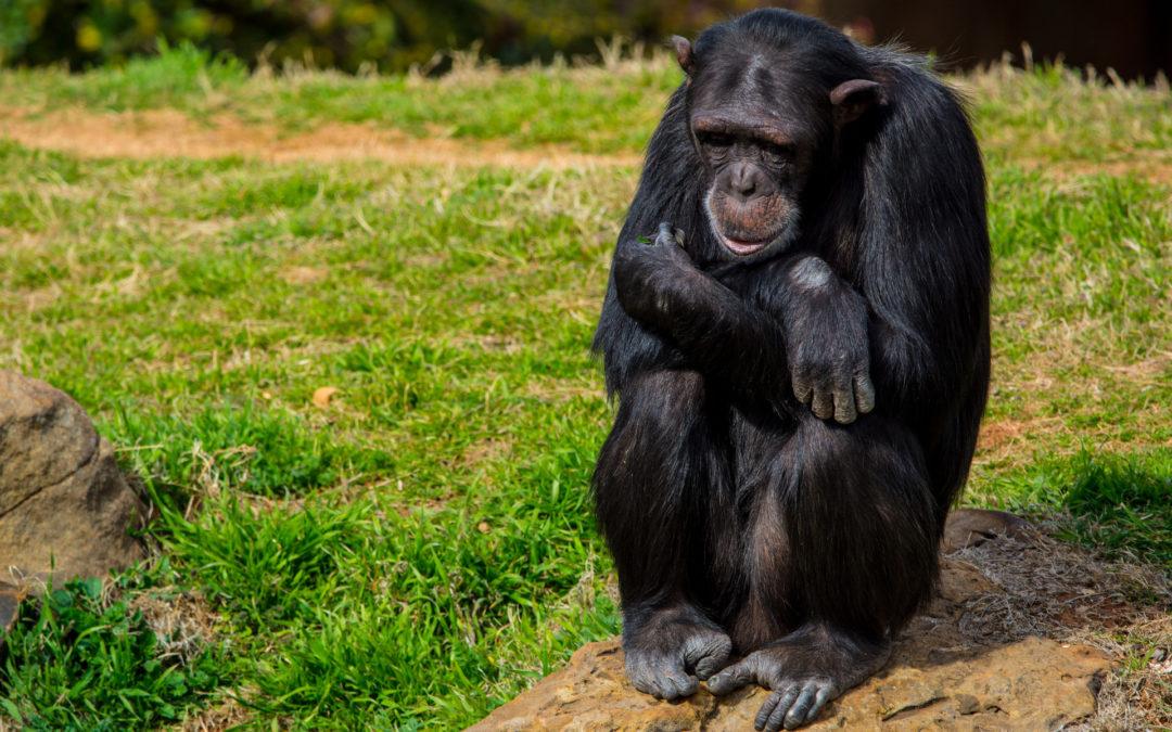 Die Zootiere – ein leises Leiden!