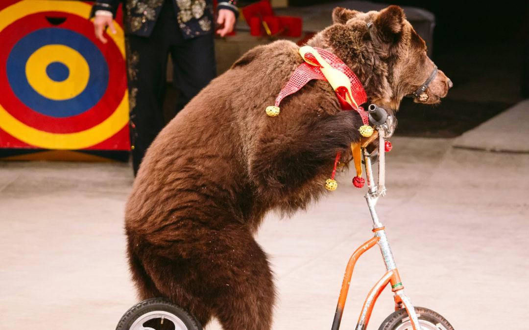 Tanzbären – ein schaurig lustiges Folterspiel